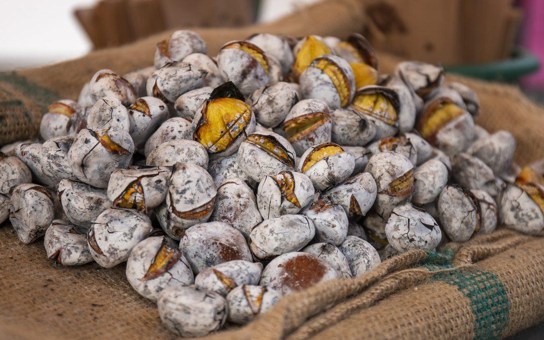 Otoño, tiempo de castañas: cultivo, propiedades y cómo cocinarlas